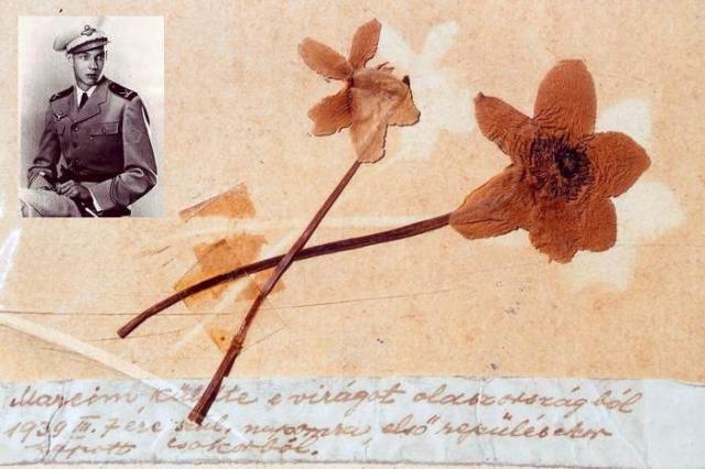70 éves virág