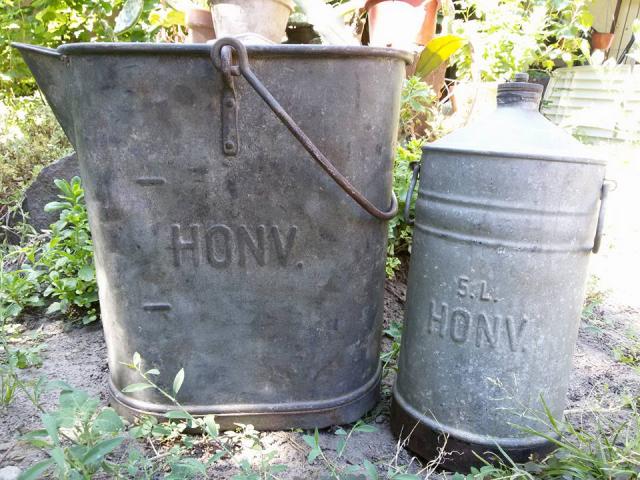 HONV kannák