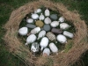 Egy fészekaljnyi tojás, vagy mégsem?